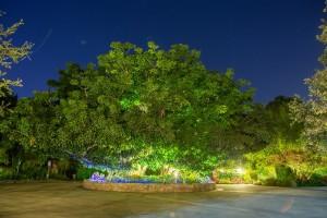 Lucas-Rossi-Photography-Eden-Gardens-1